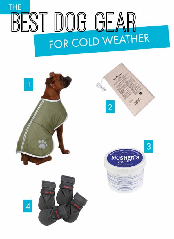 photo of winter dog supplies